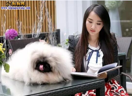 养什么狗好?请教一下什么狗比较好养点?