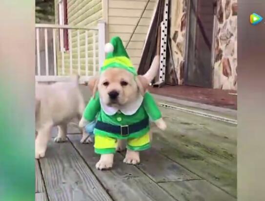 小狗视频大全、看看这些可爱有趣的小狗狗多可爱