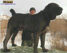 城市禁养犬种名单:哈尔滨禁止饲