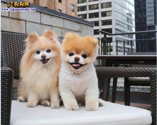 """全世界最可爱狗狗病逝!被称为""""宠物网红""""始祖"""