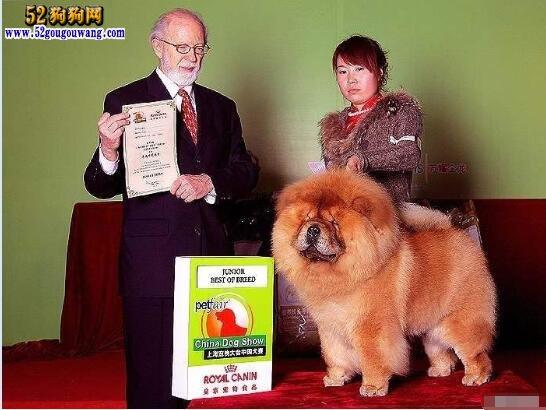 2019年松狮犬价格