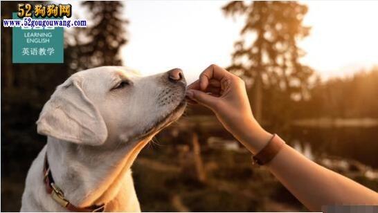 英国人说:应对气候变化、让宠物狗改吃虫子你接受吗?