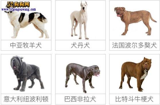 城市禁养犬种名单:成都市禁止饲养哪些犬种?