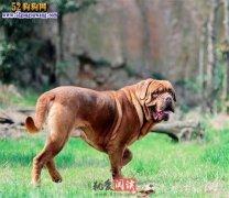 城市禁养犬种名单:广州市禁止饲
