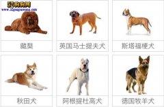 城市禁养犬种名单:成都市禁止饲