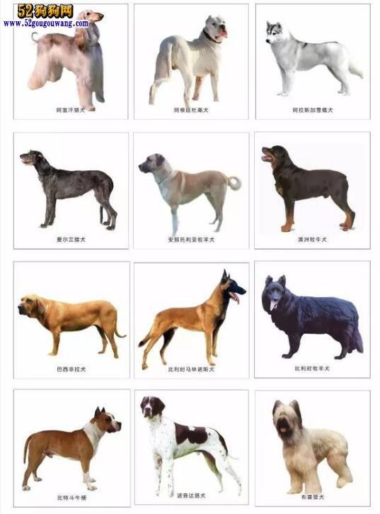 城市禁养犬种名单:秦皇岛市禁止饲养哪些犬种?