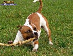 城市禁养犬种名单:济南市禁止饲