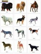城市禁养犬种名单:秦皇岛市禁止