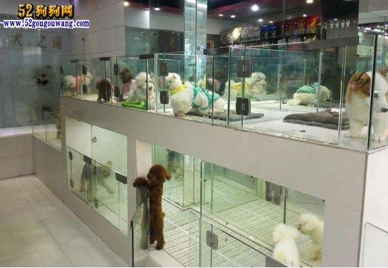 宠物狗专卖店