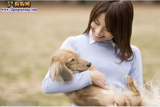 适合家养不掉毛的狗狗?六种不掉毛无体味狗推荐!
