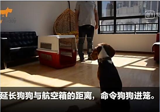 狗狗训练视频:狗狗笼内基础训练
