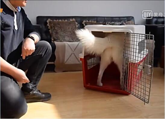 狗狗训练视频:狗狗笼内训练方法