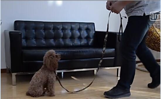 狗狗训练视频:怎么训练狗狗等待(上)
