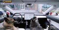 太暖人了!特斯拉推出狗狗车载服