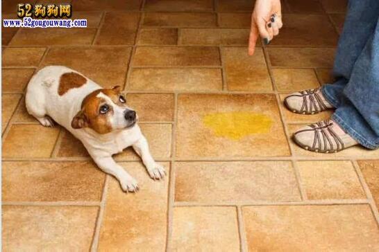 狗狗怎么训练