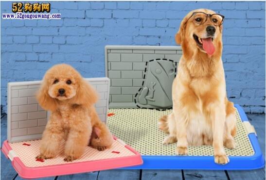 如何训练狗狗定点大小便?