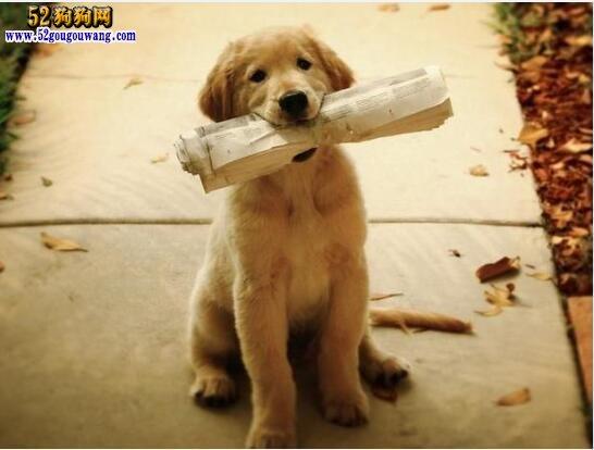 狗狗训练教程、日常训狗的18个技巧!