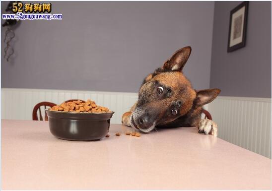 狗狗呕吐是怎么回事?狗狗呕吐必知的注意事项!