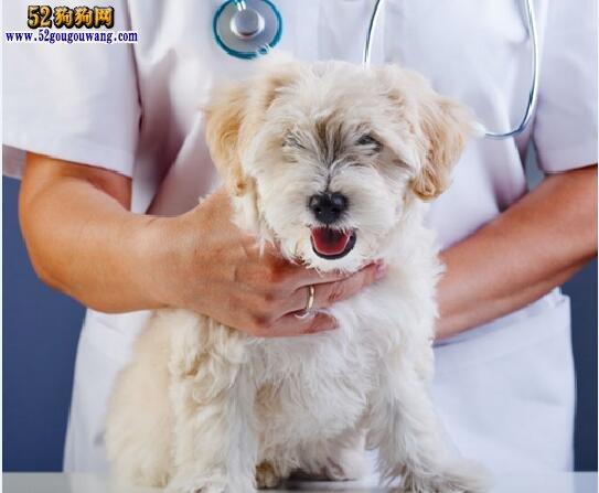 狗狗呕吐吃什么药
