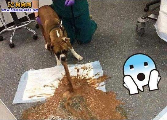 狗狗吐狗粮!狗狗吃狗粮怎么回事