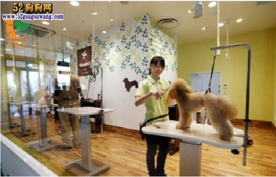 宠物美容店、宠物美容店赚钱吗?投资要多少钱?