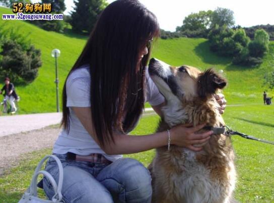 老狗、十年老狗不能喂吗?农村说老狗十年成精什么意思?