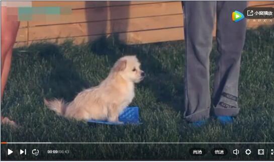 太迪狗怎么训练视频