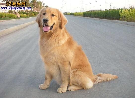 怀疑男子偷了自己的狗饲养!两家人大打出手遭惩罚!