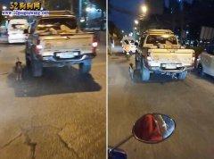 泰国被弃宠物狗拼命追赶主人汽车