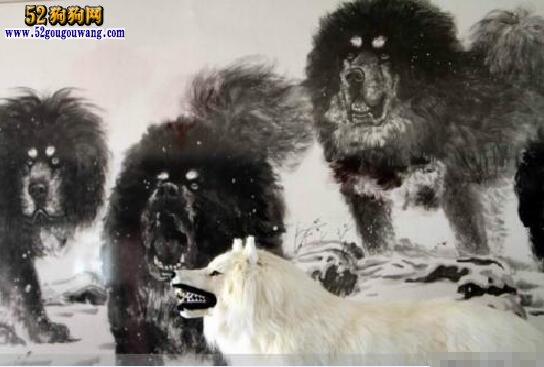 藏獒和狼谁厉害