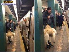 美国男子用麻袋背狗搭地铁被拒!