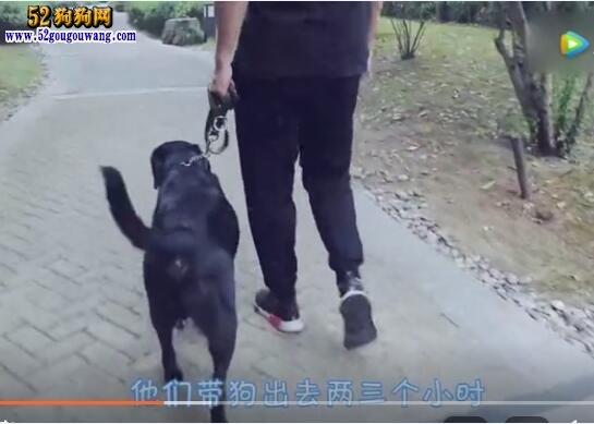 怎么教狗狗用厕所?训练狗狗自己在外面上厕所方法!