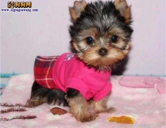 小型狗狗品种大全及图片