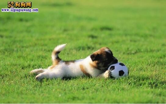 可爱的狗狗图片