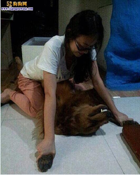 狗狗的照片