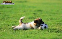 可爱的狗狗图片,一组