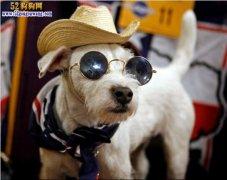 狗狗的照片,各种精美