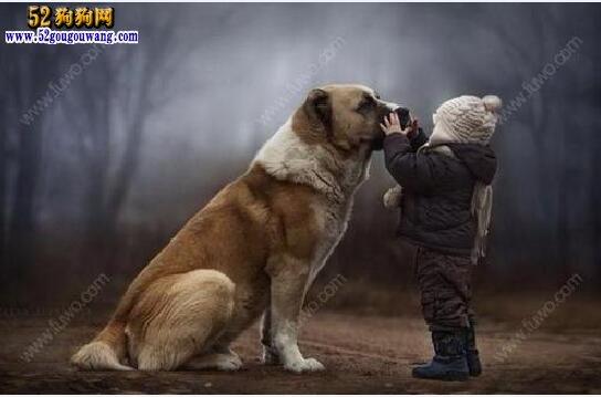 养狗的好处