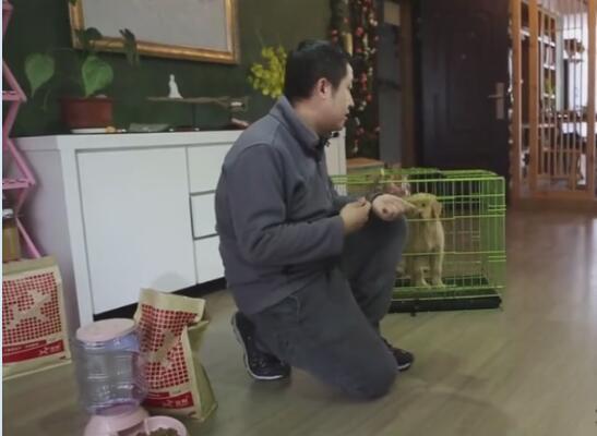 训练狗狗的视频教程,狗狗的衔取、咬吐训练方法