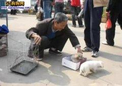 农村大爷不理解:宠物狗重金花钱