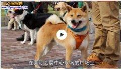 """青岛50只宠物狗当上""""代言人""""!"""