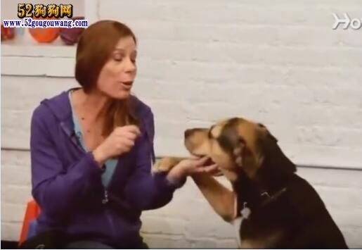 怎么训练狗狗握手