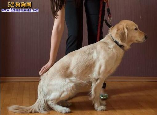 怎样训练狗狗