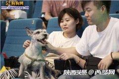 《一条狗的使命》50只宠物狗与主