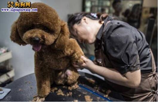 宠物美容师学校