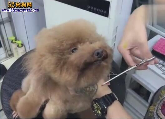 狗狗美容教程视频