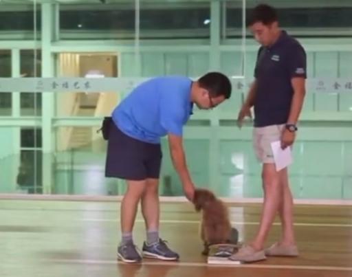 怎么训练狗狗滑滑板视频