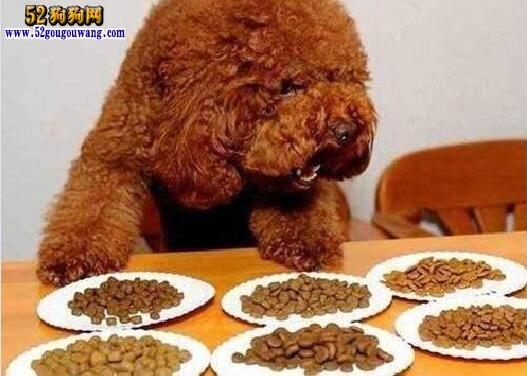 泰迪吃什么
