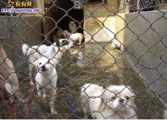 兰州开通宠物狗弃养收容绿色通道!不想养的狗别让它们到处流浪了!