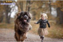 没拴绳的狗吓倒老人致残狗主人需